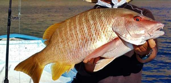 Pargo - Dog Snapper